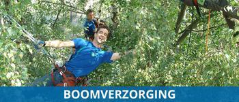 Boomverzorging Konijnenberg bos en groen
