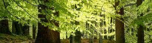 Onderhoud Bos Konijnenberg Bos en Groen